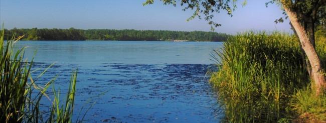 En sø, der ses siv og et træ i forgrunden, i baggrunden en skov.